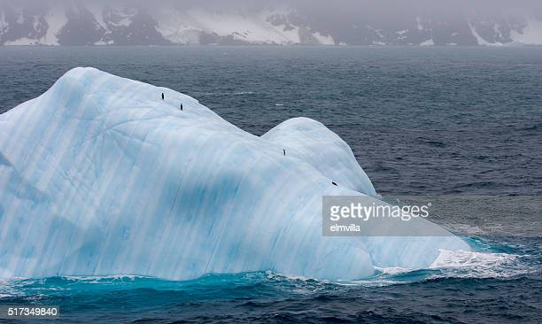 Four chinstrap penguins on an iceberg in Antarctica