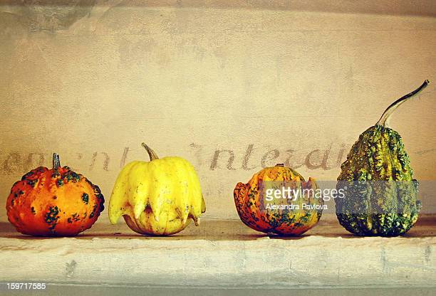 four colorful pumpkins arranged in a row - alexandra pavlova stock pictures, royalty-free photos & images