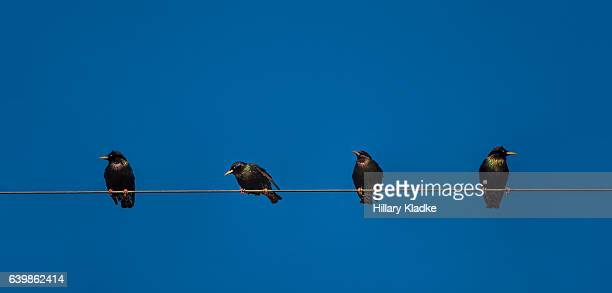four crows sitting on a wire - merel stockfoto's en -beelden