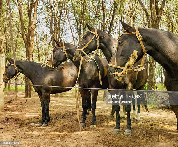 Four Cuarteteras are photographed for Vanity Fair on April 28, 2015 at Adolfo Cambiaso's farm in Cordoba Province, Argentina. PUBLISHED IMAGE.