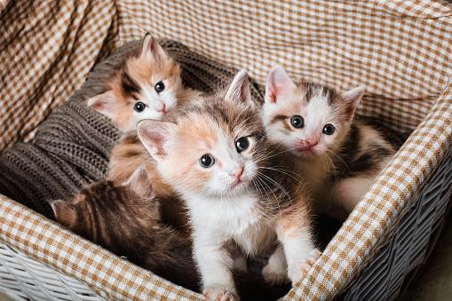 Four cute kitten in a white basket 912443616
