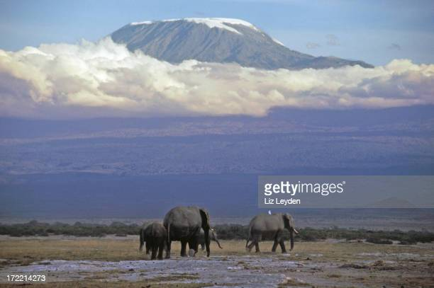 Four elephants in front of Mt Kilimanjaro