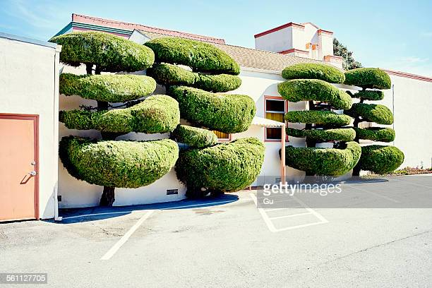 Four fancy shaped trees in parking lot