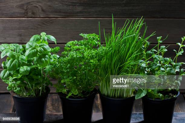 four flowerpots with various herbs - チャイブ ストックフォトと画像