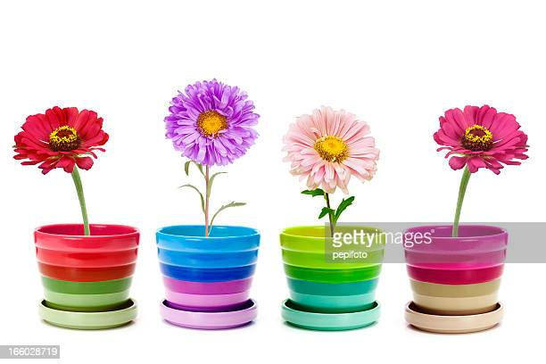 four flowers - gerbera stock pictures, royalty-free photos & images