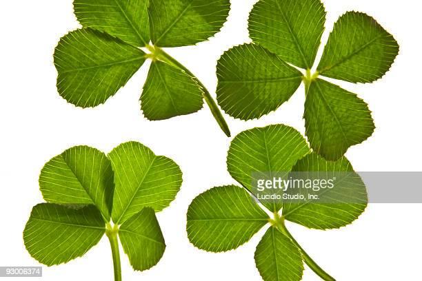 four four leaf clovers - 4 leaf clover stock-fotos und bilder