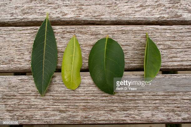 Four Green Leaves