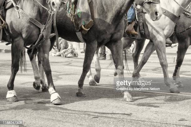 four horse legs walking in parade - parade stock pictures, royalty-free photos & images