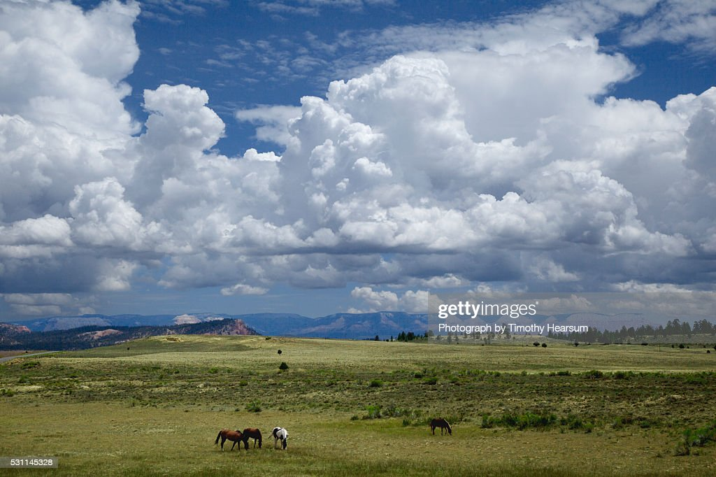 Four horses graze in a pasture with billowing clouds in a blue sky : Stock Photo