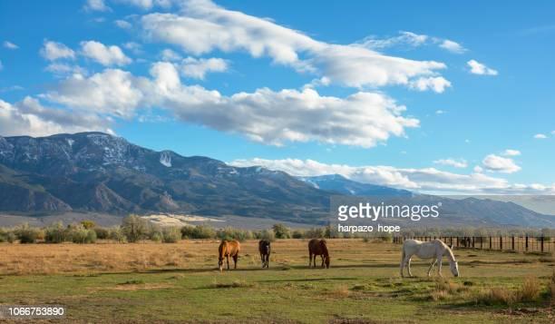 four horses grazing in a field in utah. - cavallo equino foto e immagini stock