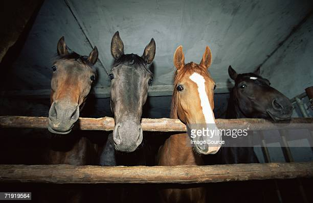 Four horses in a stable