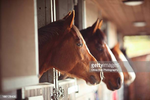 Four Horses in Stables