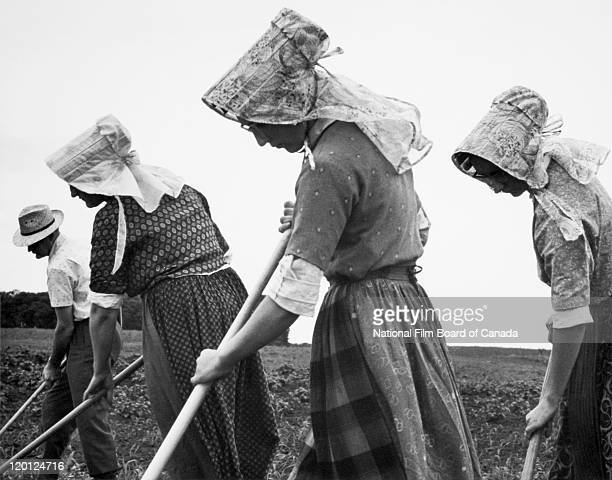 Four Hutterites are hoeing a field on the colony Northeast Alberta Canada 1963 Photo taken during the National Film Board of Canada's production of...
