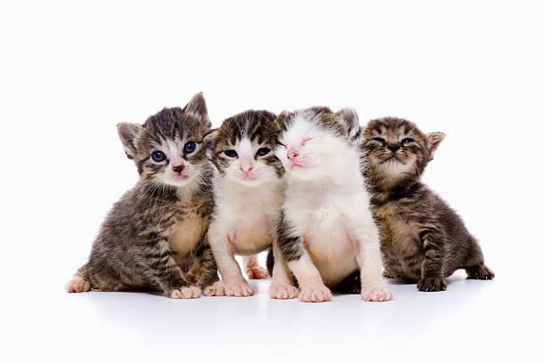 Four Kittens Wall Art