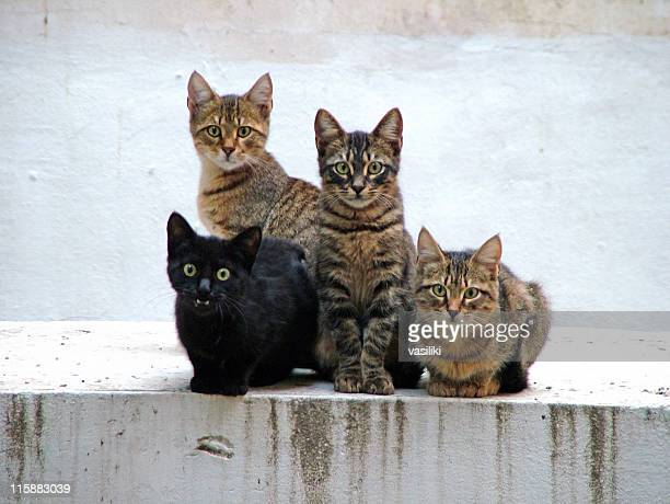 four kittens posing - group of animals stock pictures, royalty-free photos & images