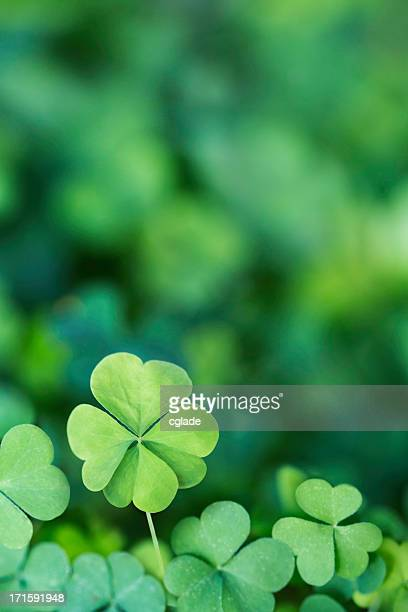 Four Leaf Clover Background Vertical