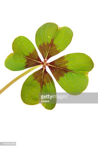 vierblättriges kleeblatt cloverleaf viel glück - 4 leaf clover stock-fotos und bilder