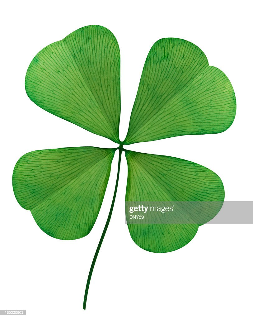 Four Leaf Clover On White Background : Stock Photo