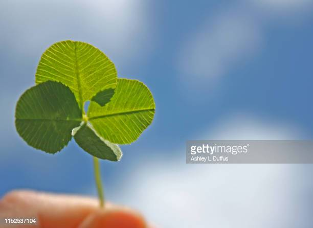 four leaf clover - march month stock pictures, royalty-free photos & images