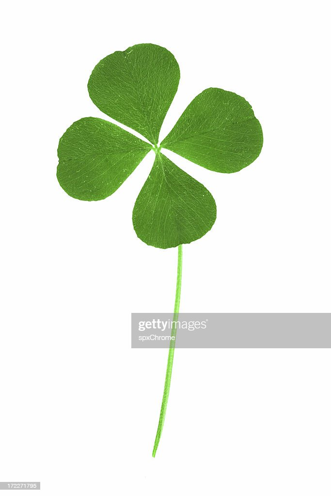 Four Leaf Clover : Stock Photo