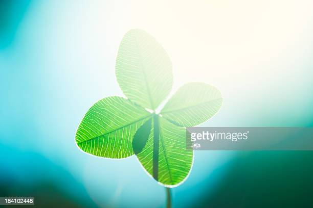 four leaf clover - st patricks day stock pictures, royalty-free photos & images