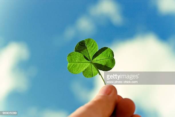 four leaf clover with sky - クローバー ストックフォトと画像