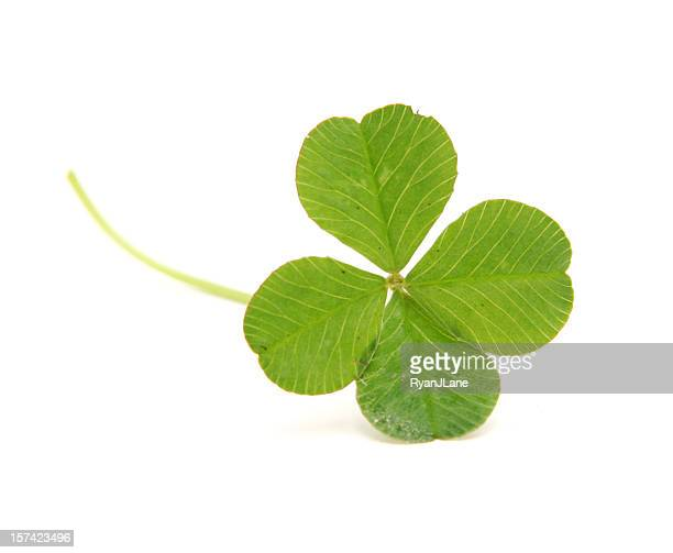Four Leafed Clover Isolated on White