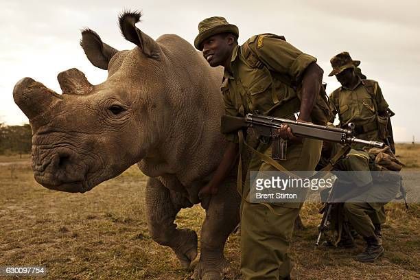 A four man antipoaching team permanently guards Northern White Rhino on Ol Pejeta Conservancy in Kenya on July 13 2011 The Ol Pejeta Conservancy is...