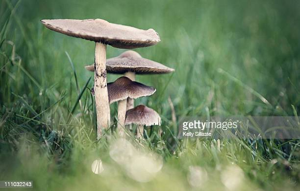 four mushrooms sheltering each other - big bulge stock pictures, royalty-free photos & images