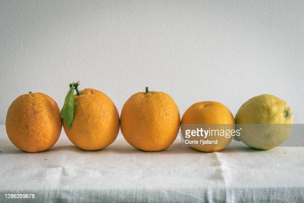 four oranges and a lemon on a line against a white background - dorte fjalland stock pictures, royalty-free photos & images