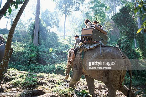 four people sitting on an elephant, chiang mai, thailand - provincia di chiang mai foto e immagini stock