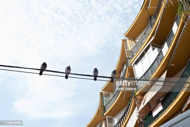 four pigeons on a cable against a bright sky and an apartment building to the right - dorte fjalland fotografías e imágenes de stock