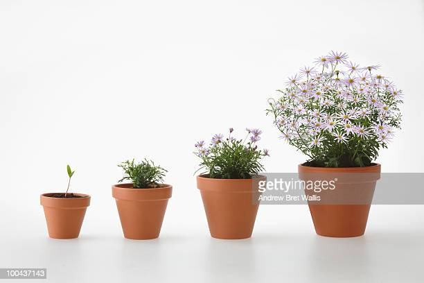 four potted plants in a row (stages of growth)