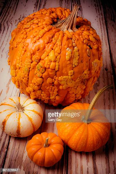four pumpkins - ugly pumpkins stock photos and pictures