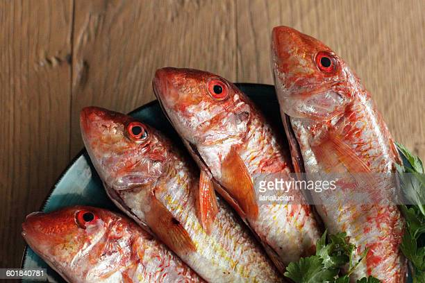 four red mullet fish on plate - mullet stock photos and pictures