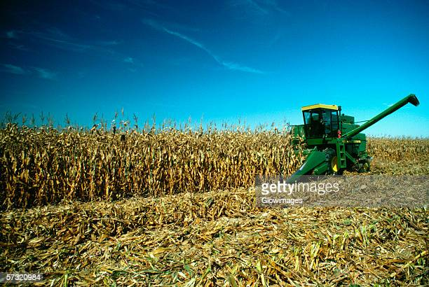 four row combine goes thru corn field, henry farm, clinton county, oh - combine harvester stock pictures, royalty-free photos & images