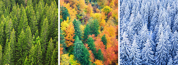 Four Season Forest Wall Art