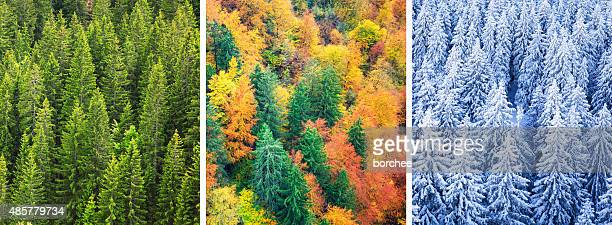 four season forest - season stock pictures, royalty-free photos & images