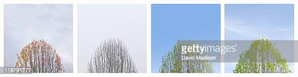 Four season montage of tree.