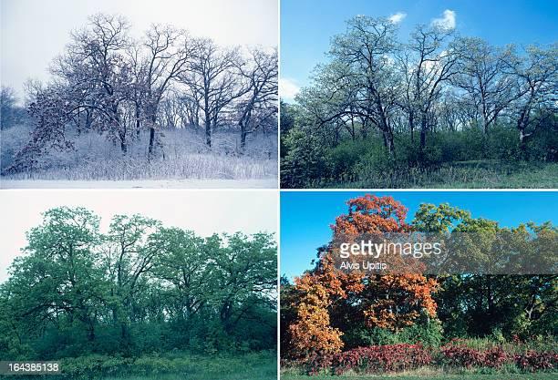 Four season of oak and sumac