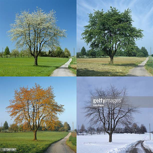 four season (image size xxl) - season stock pictures, royalty-free photos & images