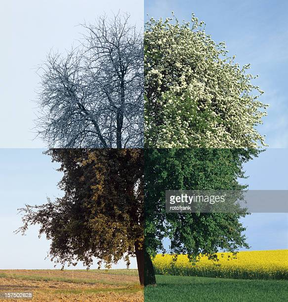 four season (image size xxxl) - season stock pictures, royalty-free photos & images