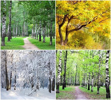 Four seasons collage 1048383620