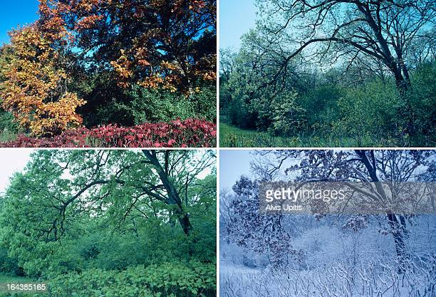 Four seasons of oak and sumac