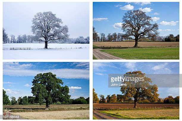 four seasons - four seasons stock pictures, royalty-free photos & images