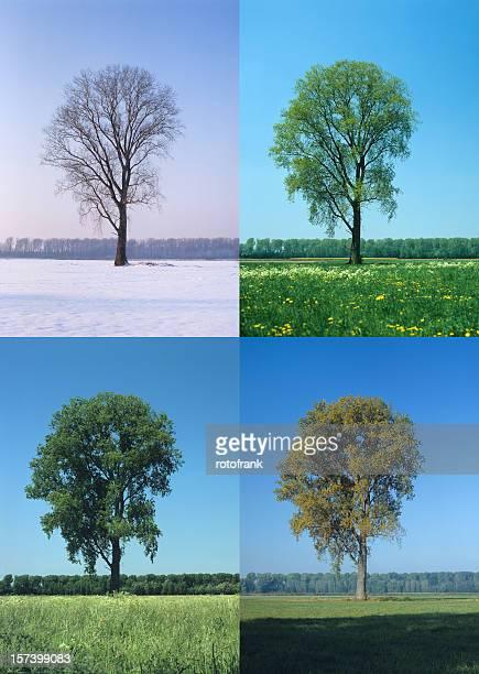 Four Seasons (Bildgröße XXL erhältlich