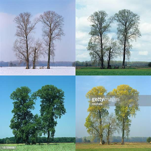 Four Seasons (image size XXL)