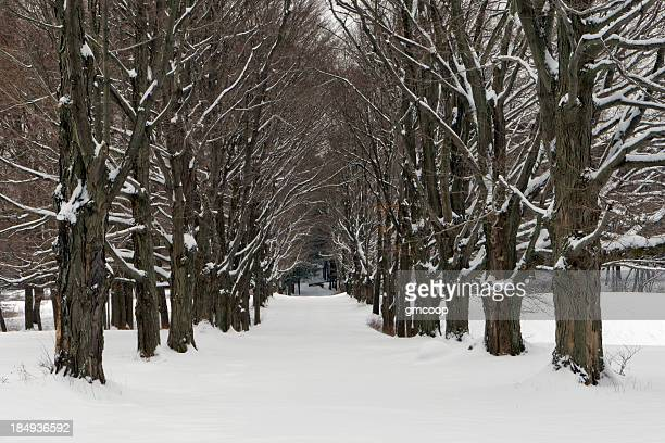 Four Seasons, Tree Alley-hiver