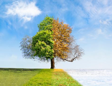 Four seasons tree 176237933
