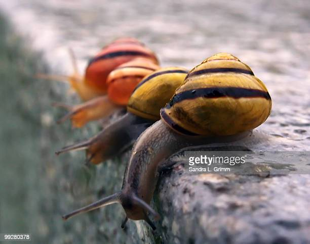 Four snails peering over a ledge